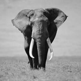 elephant-co.com